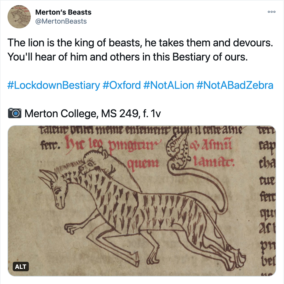 Screenshot of a tweet containing a manuscript illumination depicting a lion hunting a zebra. The following caption accompanies the image:  The lion is the king of beasts, he takes them and devours. You'll hear of him and others in this Bestiary of ours.